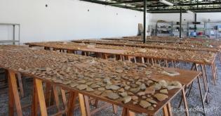滿桌的陶器碎片等著分類、選取及修復。
