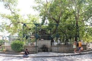 位於科斯城中心的希波克拉底之樹